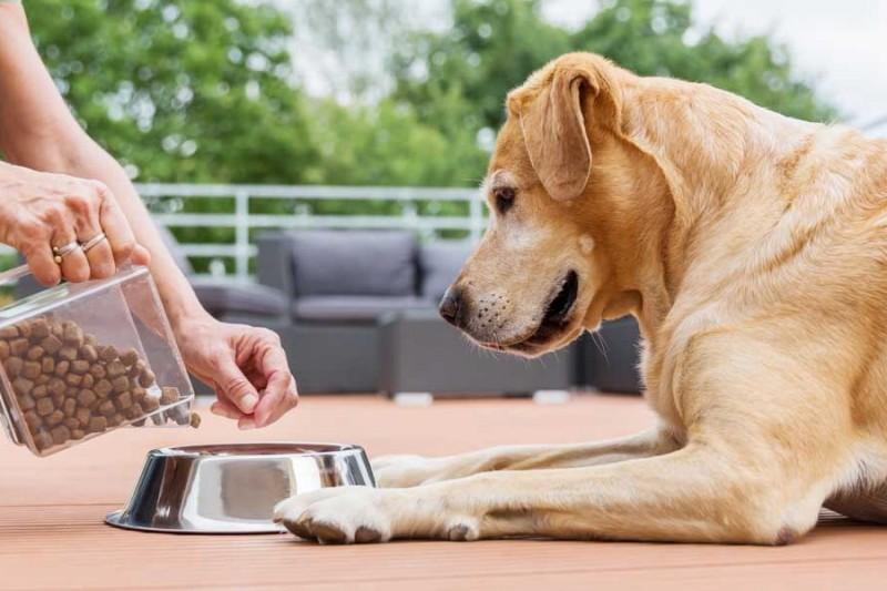 Витамины и добавки для собак