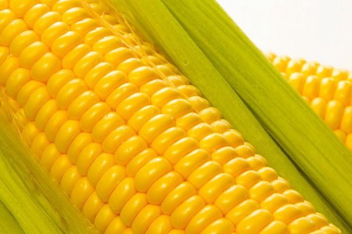 Чем полезны семена кукурузы?